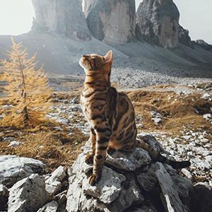 Katės sveikatai